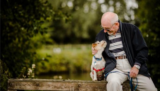 Uuring: koeraomanikud elavad kauem, eriti infarkti ja insuldi üleelanud